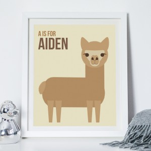 NOTHS_Alpaca_Aiden